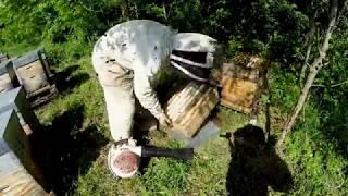 Пчеловодство во Франции - 3 ой эпизод - aапрель