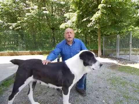 Sesso video ragazza con il cane