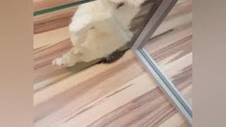 Милые коты Нежные котики Нежные коты Смешные коты и кошки