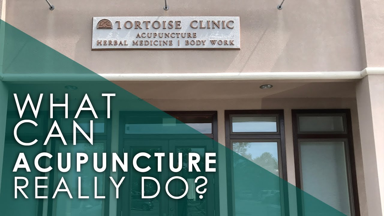 What Can the Tortoise Clinic Do for You?