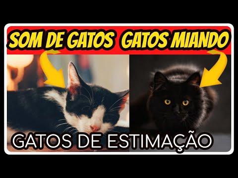 Som de Gato  | Gato Miando ALTO  -  Gato De Estimao