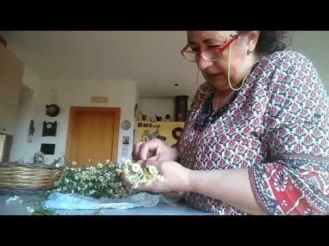 Raccolta di erbe da BPH buy