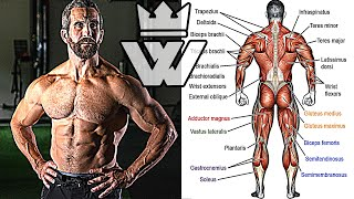 TOTAL BODY WORKOUT (Back, Arms, Core, Legs, Shoulders, Chest)