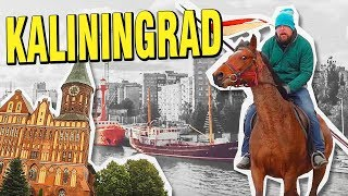 Kaliningrad for $100: Dancing trees, Prussian forts, horse riding and lots of moss