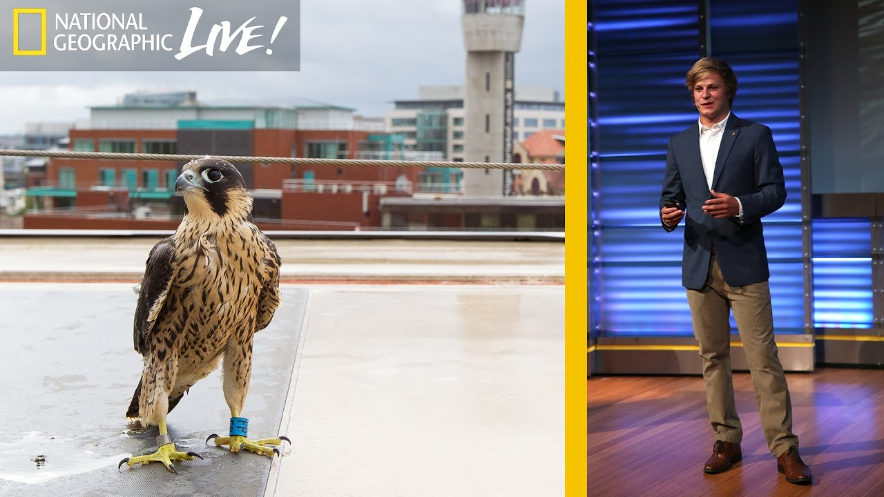Adventures in Photographing England's Urban Wildlife | Nat Geo Live thumbnail