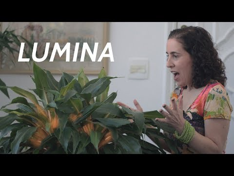 download lagu mp3 mp4 Lumina Planta, download lagu Lumina Planta gratis, unduh video klip Download Lumina Planta Mp3 dan Mp4 Unlimited Gratis