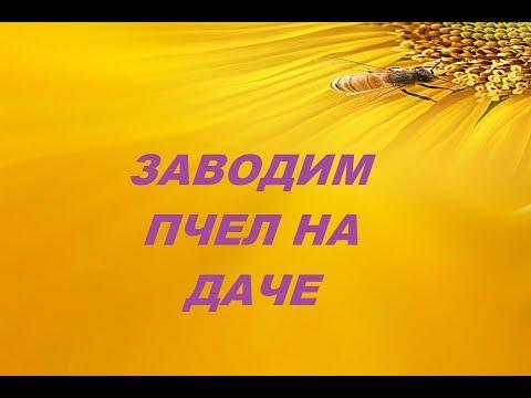 Пчеловодство  Заводим пчел на даче