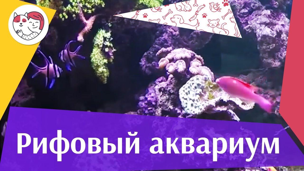 Рифовый аквариум АкваЛого на ilikePet