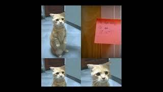 Смешные картинки с кошками! Смотреть всем!!😁😉😎 Выпуск 8
