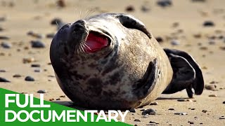Brittany: The Home of Seals | Free Documentary Nature