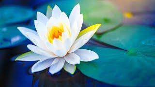 Relaxing Music 24/7, Meditation Music, Reiki Music, Healing, Stress Relief Music, Study, Sleep, Zen