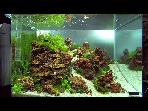 Nano Tanks of the Aquascaping Contest
