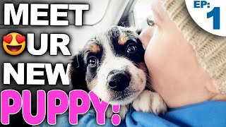 Your Complete Guide For Bringing A New Puppy Home - Bringing Home A New Puppy Episode 1