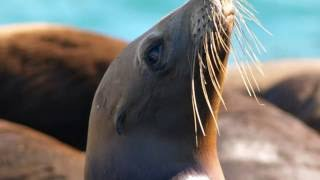 ¿Puede haber más PLÁSTICO que PECES en el mar?