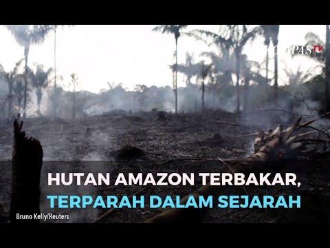 Hutan Amazon Terbakar, Terparah Dalam Sejarah