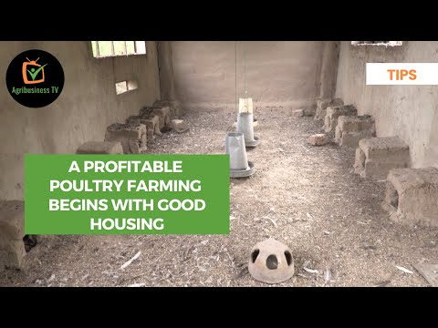 Tips: A profitable poultry farming begins with good housing Tips: A profitable poultry farming begins with good housing