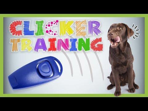 Clickertraining - Grundlagen für Anfänger | HUNDETRAINING