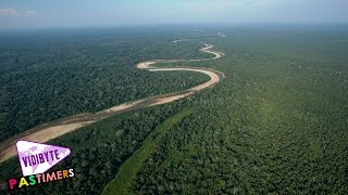 Top Ten Largest Forests Around The World    Pastimers