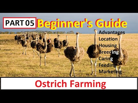 , title : 'How To Start Ostrich Farming | Part 5 | Business Starting Guide For Beginners | Complete Guide |
