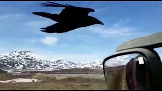 Смотреть онлайн Мужик дал пирожок летящей вороне