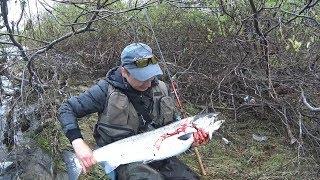 Когда ловить лосося на кольском полуострове