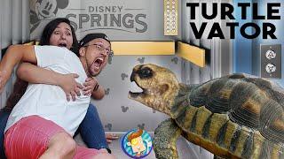 TURTLE in the ELEVATOR! ~Bad Idea~ Disney Springs in Quarantine! (FV Family Beach Vlog)