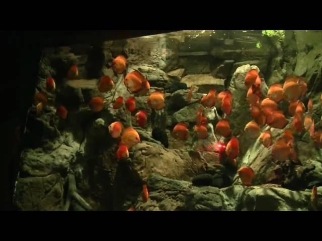 Loro Parque freshwater aquarium