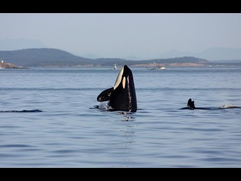 "Trailer for the 2014 Documentary ""Fragile Waters"""