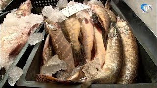 В Великом Новгороде начались рейды по выявлению незаконной торговли рыбой