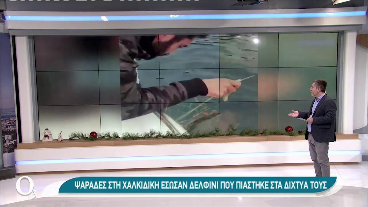 Ψαράδες διέσωσαν δελφίνι από τα δίχτυα τους   30/12/2020   ΕΡΤ
