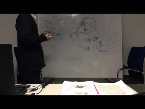 Gelmadol ของ Giardia