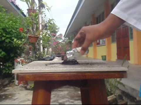 Giardia babakaka