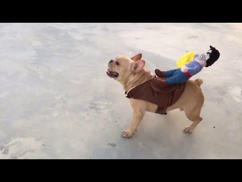 Реакция собаки на новый костюм