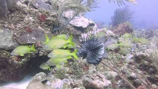 preview picture of video 'Scuba Diving - Playa del Carmen, Quintana Roo - 2'
