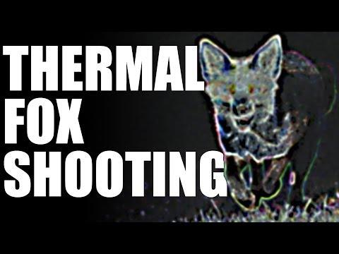 Fieldsports Britain – Thermal fox shooting