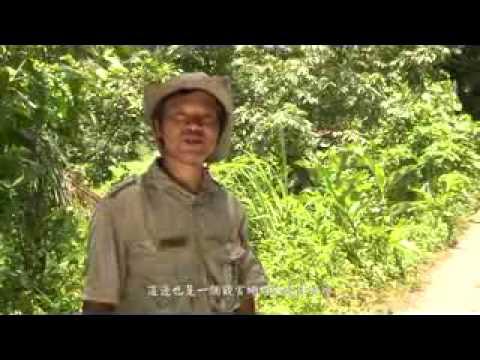 [行動解說員]墾丁國家自然公園-滿州欖仁溪