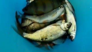 Рыбалка на озере сугояк челябинская область