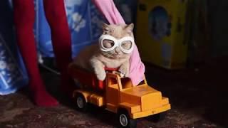 мой прикольный котик (коты приколы)