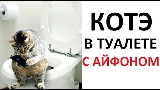 Лютые приколы. Кот в туалете с айфоном