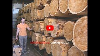 Сушка бревен для Русского Терема 500 м2 | Эксклюзивные кедровые дома | izkedradom.ru