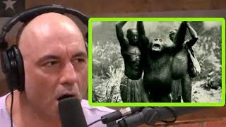 They Call These Chimps Lion Killers | Joe Rogan and Forrest Galante