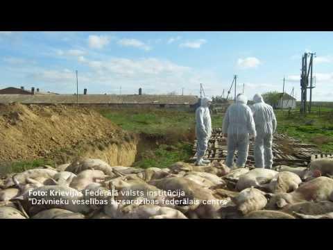 Āfrikas cūku mēris - drauds Latvijai un Eiropai