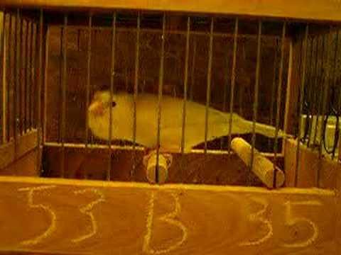 immagine di anteprima del video: 53-07-B-35 798U