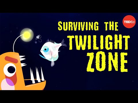 Surviving the Depths of the Twilight Zone