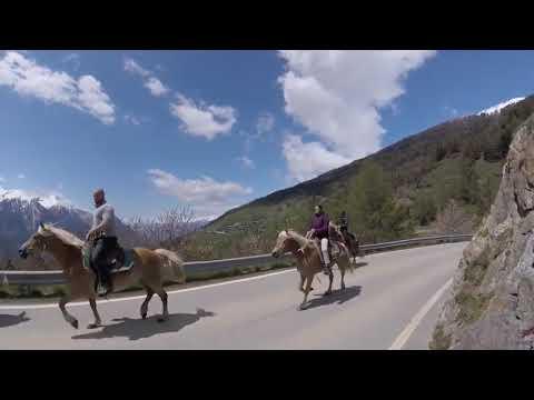 Pferdetrekking Wallis