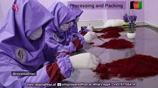 Saffron Stigmas Process and Packing Stage