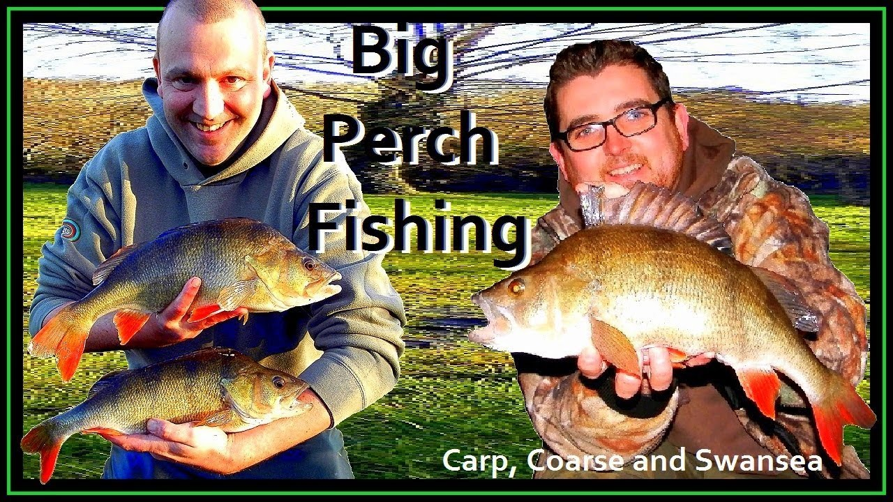 Big Perch Fishing. Video 162