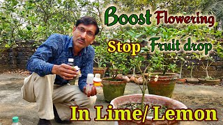 How to Boost flowering and Stop fruit drop in Lime/ Lemon plants