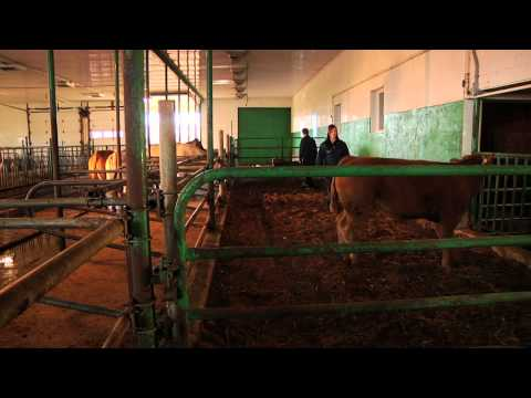 DEP | Production animale (Bovine)