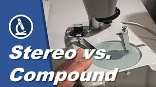 🔬 006 - What are the differences between STEREO and COMPOUND MICROSCOPES?